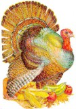 turkey01
